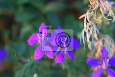 Fiori Viola Immagini.Fiori Viola Dipinti Da Parete Quadri Petali Di Fiori Giardino