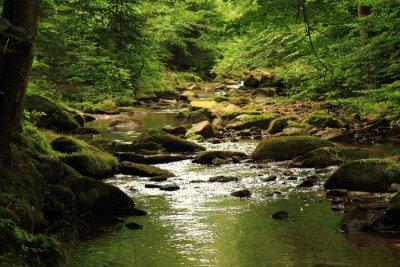 Quadro fiume nella foresta