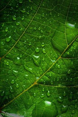 Quadro foglia verde