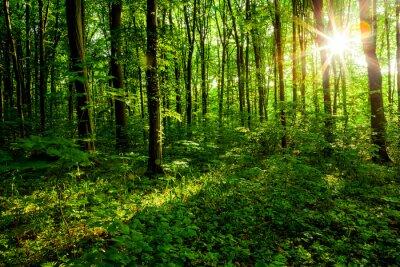 Quadro forest trees