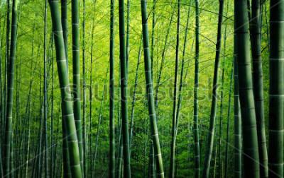 Quadro Forest Trees Nature Concept di bambù