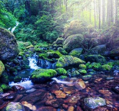 Quadro Foresta