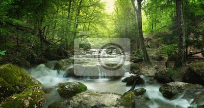 Quadro foresta cascata