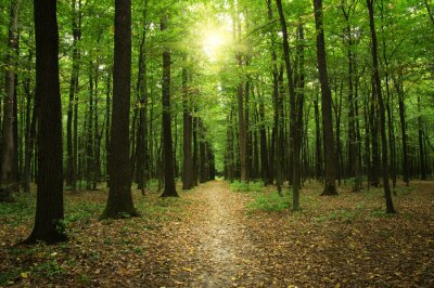 Quadro Foresta con la luce del sole