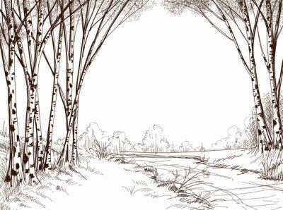 Quadro Foresta della betulla albero, sfondo grafico