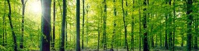 Quadro Foresta di faggi paesaggio panorama