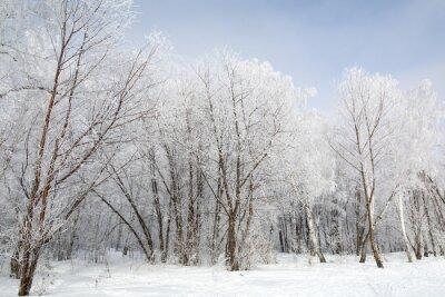 Quadro foresta di inverno