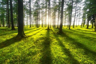 Quadro foresta di sole