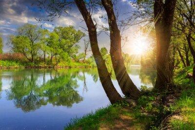 Quadro foresta fluviale con pietre e l'erba al tramonto