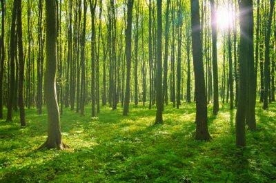 Quadro foresta in primavera