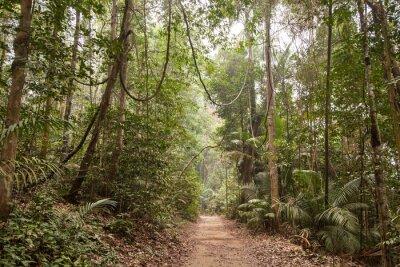 Quadro Foresta pluviale tropicale