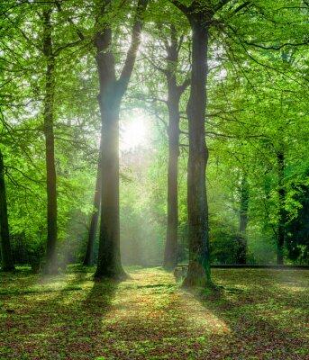 Quadro foresta verde in estate con retroilluminazione