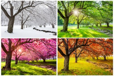 Quadro Four seasons with japanese cherry trees in Hurd Park, Dover, New Jersey