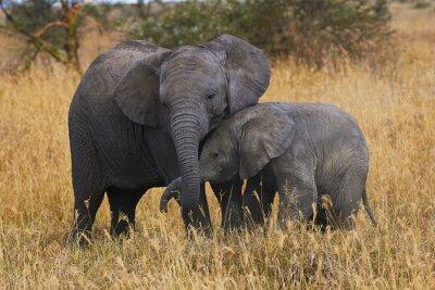 Quadro Fratelli Elephant