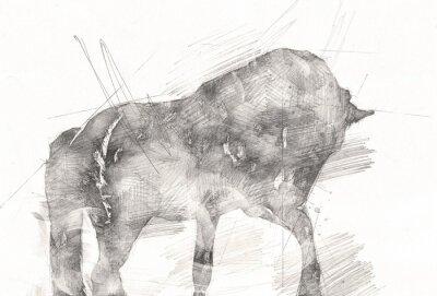 Quadro freehand horse head pencil drawing
