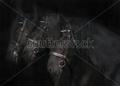 Quadro Friesian Horses