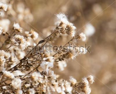 Quadro fuzz sulla pianta all'aperto in autunno