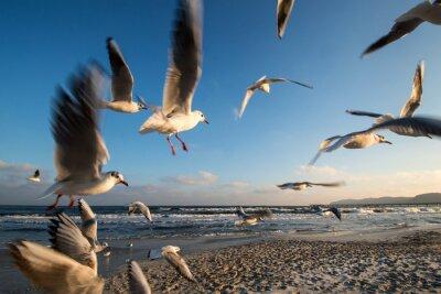 Quadro Gabbiani in volo Costa baltica Binz Germania