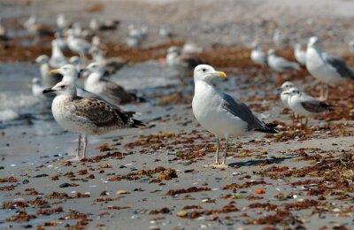 Quadro Gabbiano sulla spiaggia