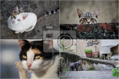 Quadro gatti