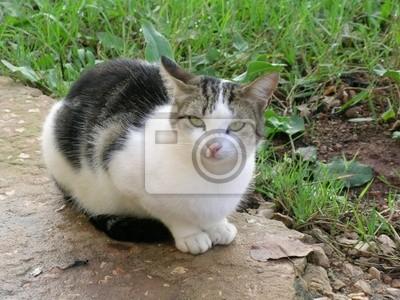 Quadro Gatto
