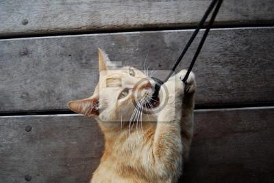 Quadro gatto - cat-gato