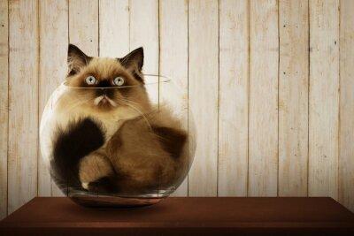 Quadro Gatto persiano sveglio dentro una ciotola di vetro
