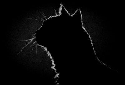 Quadro Gatto Profilo nel buio