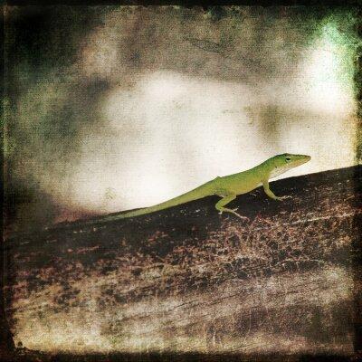 Quadro Gecko verde Cameleon Lucertola su legno del Brown Branch