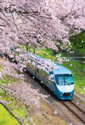 Quadro Giappone treno in sakura cherry blossom seasom a Yamakita Town, prefettura di Kanagawa