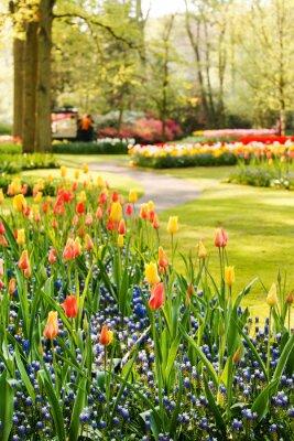 Quadro giardino di primavera