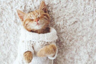 Quadro Gigner gattino