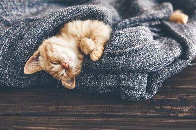 Quadro Gigner gattino che dorme