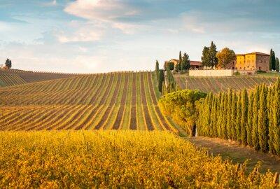 Quadro Golden vineyards in autumn at sunset, Chianti Region, Tuscany, Italy