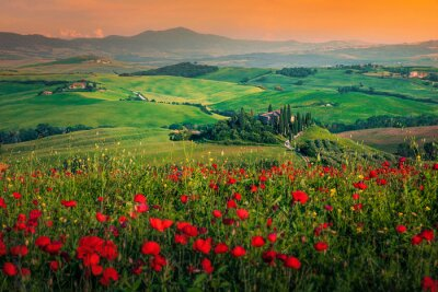 Quadro Grain fields with red poppies at sunset in Tuscany, Italy