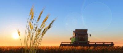 Quadro grano mietitore