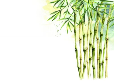 Quadro Green bamboo background, stems and leaves, Asian rainforest. Watercolor hand drawn  isolated illustration