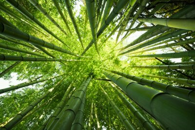 Quadro Green bamboo nature backgrounds