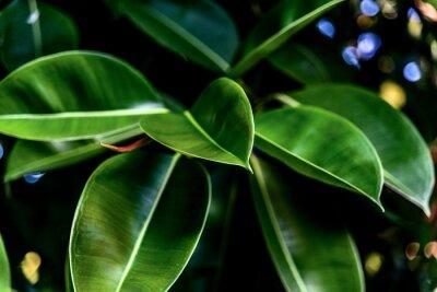 Quadro Green fresh leaves