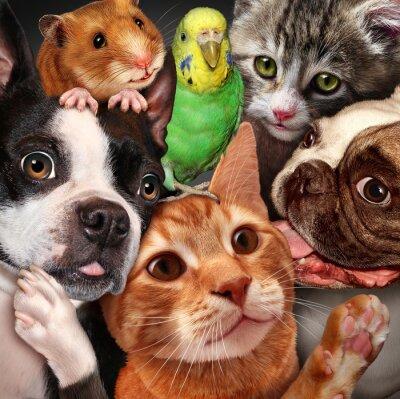 Quadro Gruppo Pet