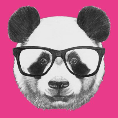 Quadro Hand drawn portrait of Panda with glasses. Vector isolated elements.