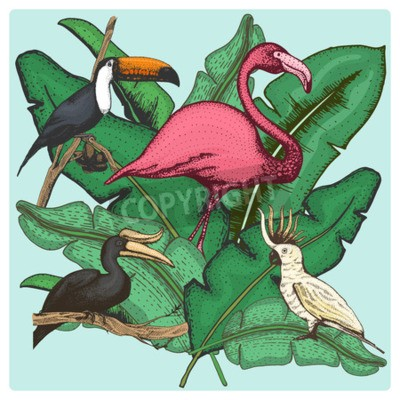 Quadro hand drawn vector realistic bird, sketch graphic style, set of domestic. cockatoo parrot and rhinoceros hornbill, toco toucan and flamingo