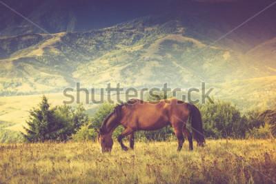 Quadro I cavalli sono al pascolo contro le montagne. Paesaggio autunnale Immagine offerto: effetto cross processing vintage.