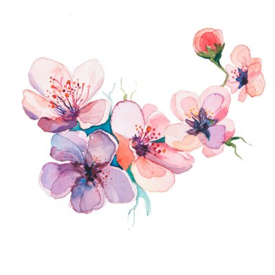Quadro i fiori di primavera acquerelli isolato su sfondo bianco