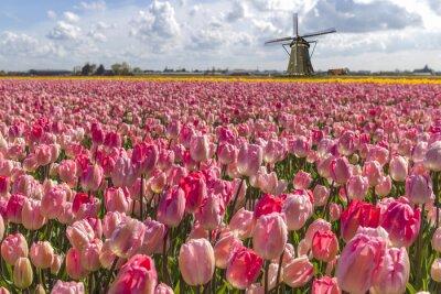 Quadro Iconic tulipani olandesi lampadina azienda agricola in primavera ad Amsterdam