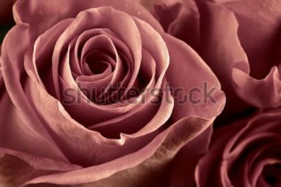 Quadro Il mazzo di marsala ha colorato il primo piano rosa dei fiori come fondo. Soft focus, DOF superficiale. Immagine filtrata.