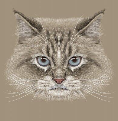 Quadro Illustrativa ritratto di gatto siberiano. Cute Cat punto di colore domestico con gli occhi azzurri.