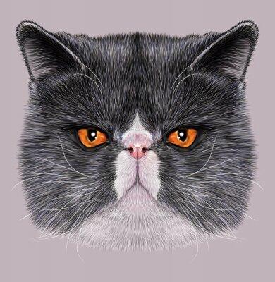 Quadro Illustrativa Ritratto di Maine Coon. Carino bi-colore gatto domestico con gli occhi verdi.