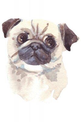 Quadro illustrazione Bulldog francese