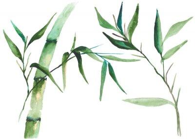 Quadro Illustrazione di bambù dell'acquerello